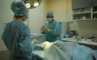 Кастрация собак: уход после операции