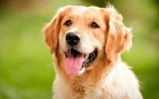 Самые дружелюбные породы собак