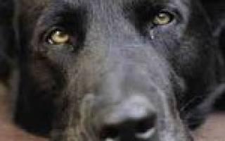 Интоксикация у собак: разбираемся в причинах и способах снятия