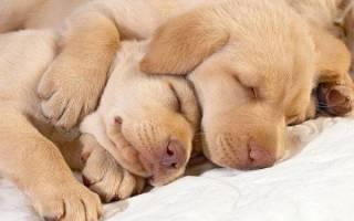 Сколько спят собаки в сутки: стадии сна, возраст и режим дня питомца