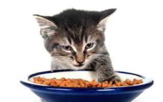 Котенок не ест сухой корм: что делать?