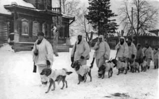 Собаки во время Великой отечественной войны: четвероногие герои победы
