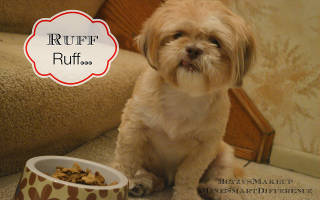Перевод щенка на сухой корм: советы и рекомендации