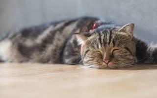Как приучить кота к владельцу