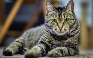 Кишечные инфекции у кошек: виды, симптомы, лечение