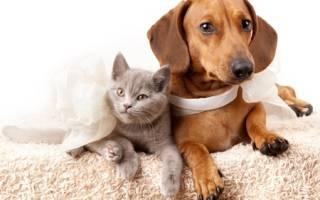 Меланома — опухоль у кошек