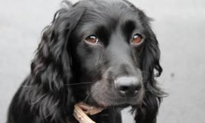 Опухоль мозга у собаки — признаки и симптомы заболевания
