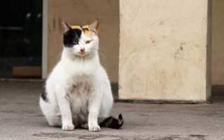 Как часто кошки беременеют