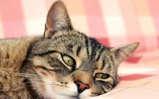 Как определить, есть ли глисты у кошки