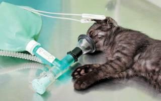 Анестезия для кошек: виды, осложнения, реабилитация