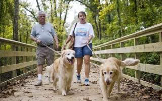Правила выгула собак: начни с себя, а мир подтянется