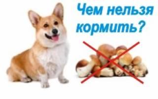 Чем нельзя кормить собаку: подробный обзор