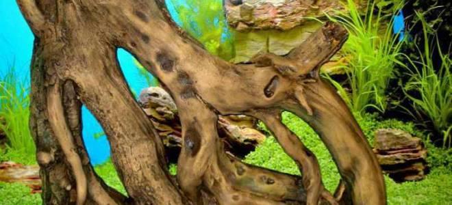 Как закрепить корягу в аквариуме
