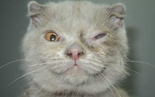 Почему у котёнка красные глаза