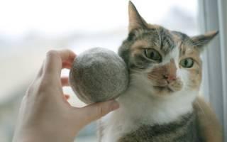 У кошки выпадает шерсть: определяем причины и способы лечения