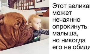 Большая собака дома