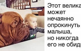 Какую собаку выбрать для охраны ребенка