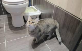 Кот писается после кастрации: основные причины и методы лечения