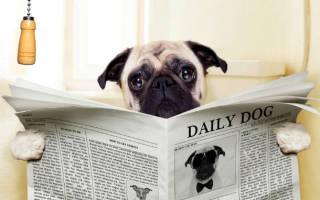 Диарея у собак: причины, симптомы и лечение