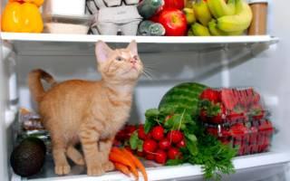 Чем кормить домашнюю кошку