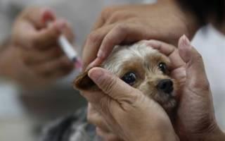 Прививка от бешенства собаке может спасти жизнь питомца
