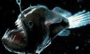 Как выглядят самые глубоководные рыбы планеты