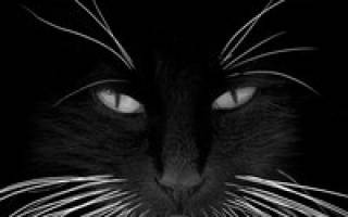У кошки ломаются усы: выявляем главные причины