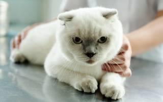 Химическая стерилизация кошек: плюсы и минусы
