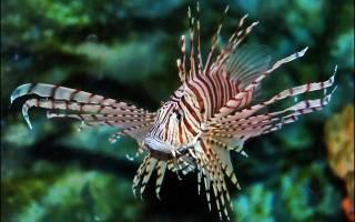Где живет рыба-зебра