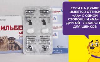 Мильбемакс для собак — обзор препарата