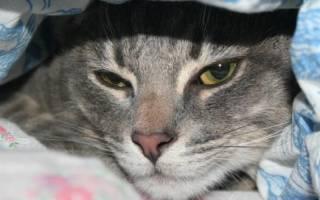 Энтерит у кошек симптомы и своевременное лечение