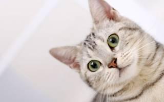Как промыть уши кошке