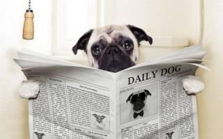 Понос у щенка после прививки: причины, что делать