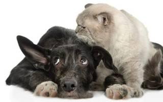 Причины и признаки глухоты у собак