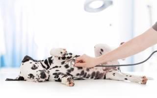 Уретрит у собак — симптомы и лечение воспаления
