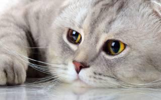 Можно ли кастрировать кота в 7 лет: техника, подготовка, с наркозом или без