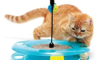 Игрушки для кошек: чем развлечь любимца