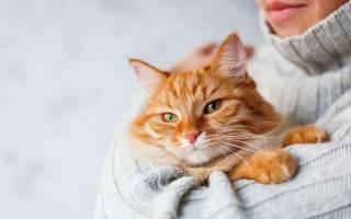Как кошки помогают людям