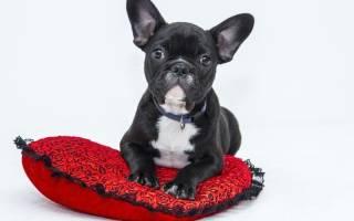 Почему собака ездит на попе? Выявляем первопричины