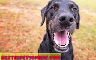Эзофагит – воспаление пищевода у собак