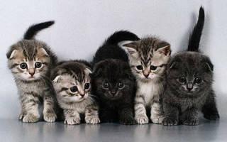Фелинотерапия: как кошки лечат людей?