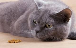 Почему кот отказывается от еды