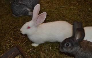 Как разводить кроликов на продажу: с чего начать