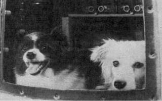 Собаки, побывавшие в космосе
