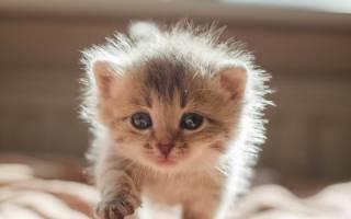 Как определить пол новорожденного котенка: простой способ