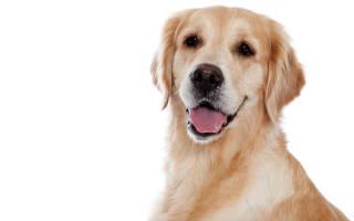 Как удалить собаке зубной камень