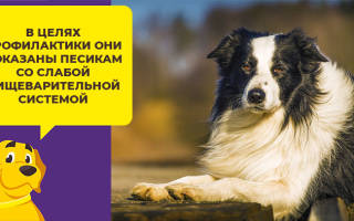 Пробиотики для собак: приводим микрофлору в порядок