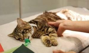 У кошки выкидыш: причины, симптомы и что делать?