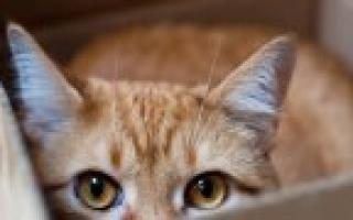 Как самостоятельно снять швы у кошки после стерилизации: подготовка и подробная инструкция