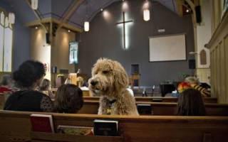 Собаки в религии: православие, ислам, буддизм, зороастризм